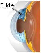 disgno che illustra l'iride
