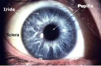 iride - sclera e pupilla dell'occhio